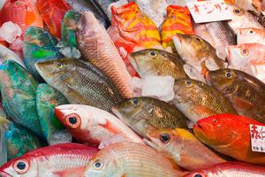 大阪の泉佐野漁港の青空市場を紹介!名物グルメやセリ見学など人気スポットが盛りだくさん