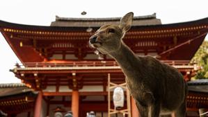 奈良でじゃらんで口コミ星4.0以上の高評価!人気のホテル10選