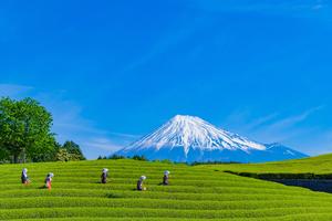 ランキング上位の静岡のホテル20選!予算内でより良いホテル選びを