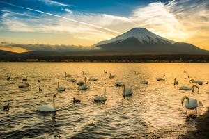 【山梨】山中湖でランキング上位のホテル10選!大切な時間を過ごすならここ!