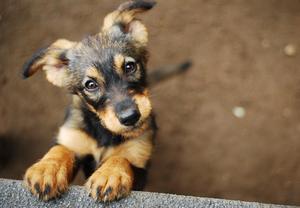 【福島】ペットと一緒に旅行へ!裏磐梯で人気の愛犬と泊まれる宿9選