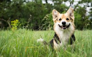 【石川】金沢でペットと一緒に過ごせる人気の宿!愛犬とのんびり♪