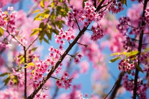 【沖縄】那覇市の桜の名所「与儀公園」の見どころとは?合わせて訪れたい周辺のおすすめスポット!