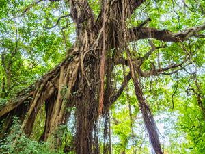 【沖縄】太古の昔の面影を残す神秘の森「ガンガラーの谷」とは?