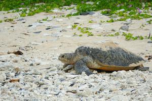 【沖縄】西の浜で海と島のパノラマ風景を眺めてゆったり過ごそう