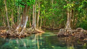 【沖縄】広大なマングローブ林に圧倒!「東村(ひがしそん)ふれあいヒルギ公園」で散策やカヌーを楽しもう