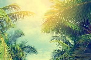 【沖縄】「米原のヤエヤマヤシ群落」は石垣島の隠れ名スポット!希少なヤシの木が織りなすジャングル