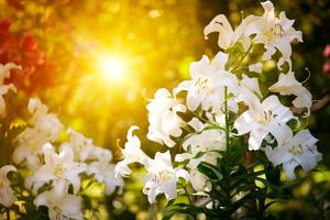 【沖縄】リリーフィールド公園の日本一開花の早いのゆりを体験!伊江島の観光スポットもご紹介