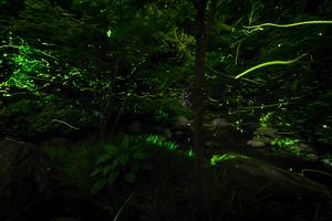 【沖縄】久米島ホタル館で久米島の自然を学ぼう!ホタルツアーで幻想的なホタルも観察できる!