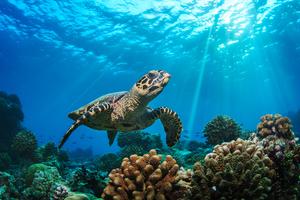 沖縄のおすすめ水族館「久米島ウミガメ館」 様々なウミガメのことを知ろう