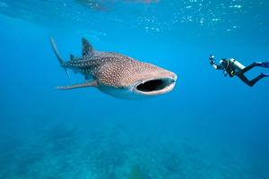 【沖縄】トップマリンでマリンスポーツを楽しもう!ジンベエザメに会えるプランも紹介