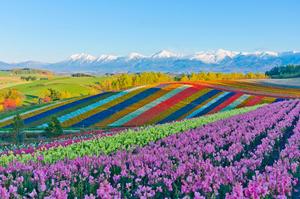 【2020年】北海道マニアおすすめのお土産はコレ!贈って喜ばれた雑貨&スイーツ