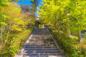 鎌倉のおすすめ子連れ旅館:口コミ評判の高い宿をご紹介